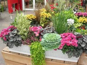 Fleur D Hiver Pour Jardinière : fleurs retombantes pour jardini res fashion designs ~ Dailycaller-alerts.com Idées de Décoration