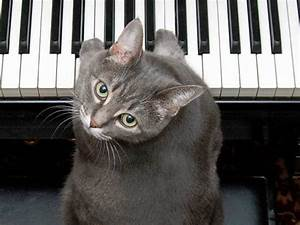 Column Chart Forget Ai Musicians Need To Be Scared Of Cats