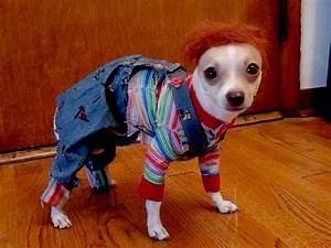 8 Dogs Dressed as Your Favorite Horror Movie Characters ...