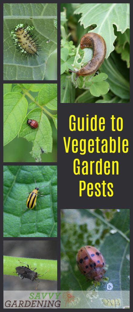 Guide To Vegetable Garden Pests Identification And