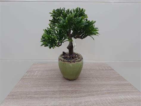 Tree O ต้นไม้ประดิษฐ์ตกแต่ง XCJ021  GlobalHouse