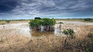 Climate Change Prompts A Rethink Of Everglades Management