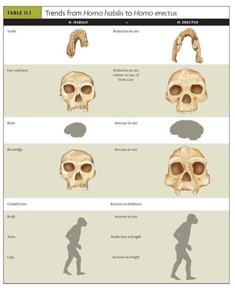 evolution modern humans heidelbergensis rachael edwards