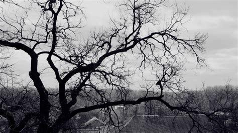 Tree Wallpapers Black And White AirWallpaper Com