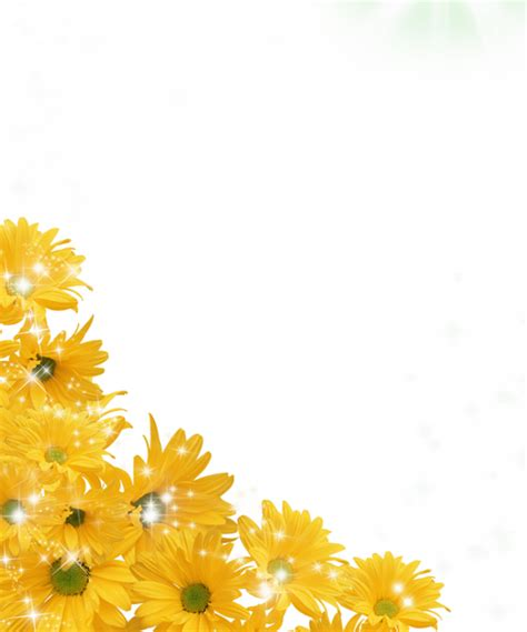 sunflower photo png   icons  png backgrounds