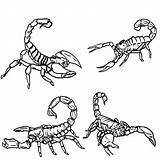 Scorpion Coloring Drawing Outline Scorpions Printable Draw Clipart Sketch Template Clip Animals Getcolorings Step Getdrawings Library sketch template