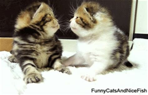Kittens Gif  Find & Share On Giphy