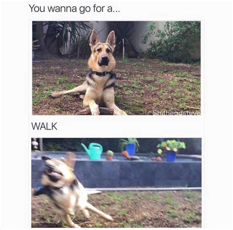Walking Meme - funny animal pictures of the day 20 pics