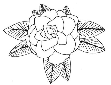 Artsy Coloring Pages How To Draw A Camellia Camellia Coloring Pages And