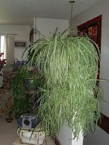 Zimmerpflanzen Für Wenig Licht : 1001 ideen f r zimmerpflanzen f r wenig licht pflanzen ~ A.2002-acura-tl-radio.info Haus und Dekorationen
