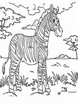 Rainforest Zebra Coloring Animals Dschungeltiere Ausmalbilder Malvorlagen Konabeun Colornimbus Animal Drawing Drucken Zum Kinder 收藏自 sketch template