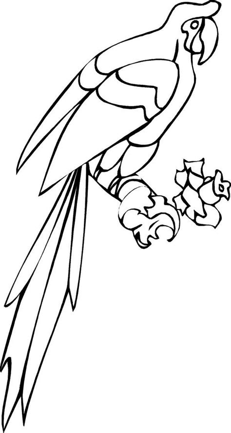 long tail parrot coloring page  print  coloring pages   color nimbus