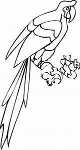 Coloring Parrot Tail Fish Colornimbus Colorear Bunny Youngandtae Loros Dibujo Bird Princess Drawing Dibujos Copyright sketch template