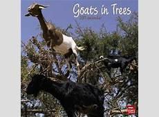 Goats in Trees Calendar Neatorama