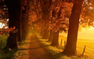 Orange Halloween Pathway Lights by A Soundtrack For Autumn Five Albums Perfect For The Fall