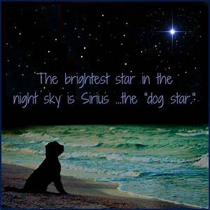 dog star sirius - Video Search Engine at Search.com