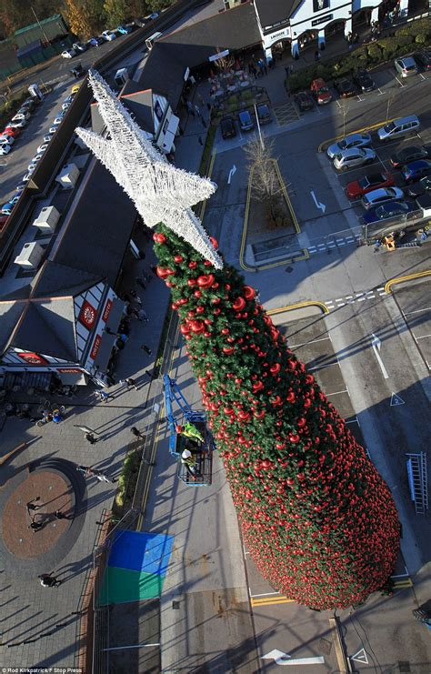 We would like to show you a description here but the site won't allow us. Britain's largest Christmas tree goes up in Cheshire   Daily Mail Online