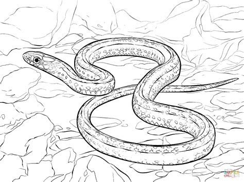 Plains Garter Snake Coloring Page Free Printable