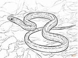 Coloring Pages Snake Garter Plains Drawing Printable Paper sketch template