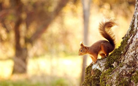 pin  hot spicy  hd wallpapers   animal