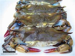 Oil Market Price Chart Soft Shell Blue Crab Giovanni 39 S Fish Market