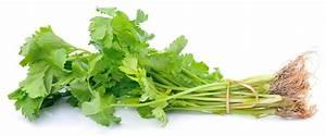 Walnut Oil Salad Dressing Recipes