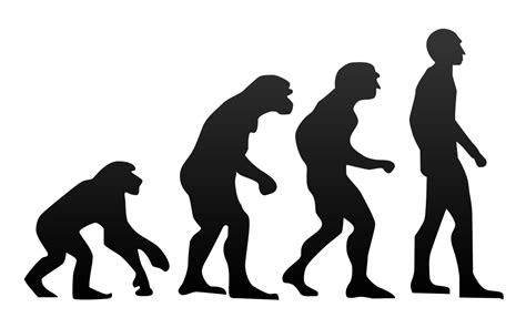 Filehuman Evolutionsvg  Wikimedia Commons