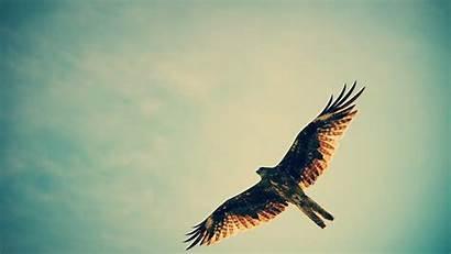 Hawk 4k Wallpapers Birds Eagle 1080p Wings