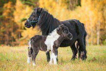 pferderassen und ihr charakter