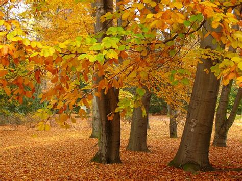 Garten Im Herbst Bearbeiten by Bank Garten Baum Park Blatt Herbst Der