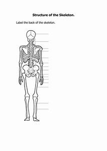 Skeletal System By Jules42 - Teaching Resources