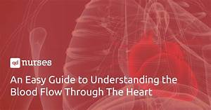 An Easy Guide To Understanding The Blood Flow Through The