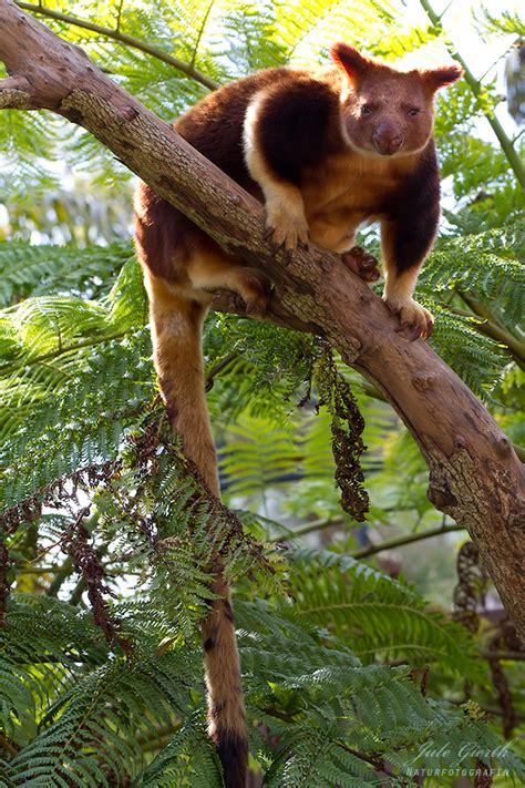 taronga zoo sydney die abenteuer von bundeskatze und