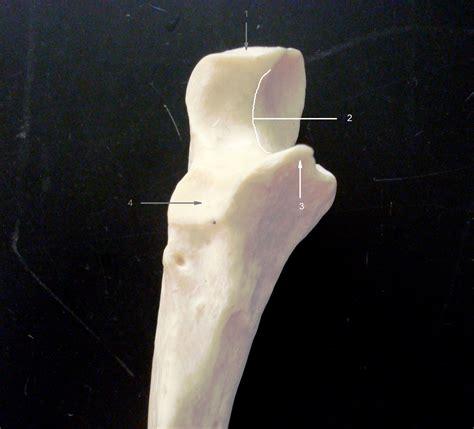 anatomy lab photographs upper limb