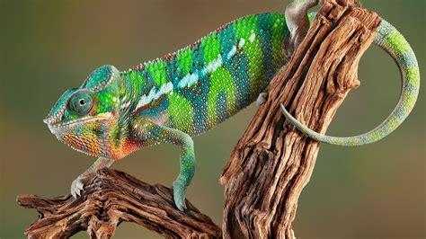 lamborghini diablo svr chameleon wallpaper desktop backgrounds