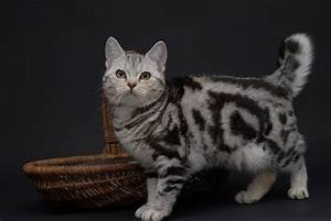 Schöne Bilder Kaufen : eine sch ne katze foto bild tiere haustiere katzen bilder auf fotocommunity ~ Orissabook.com Haus und Dekorationen