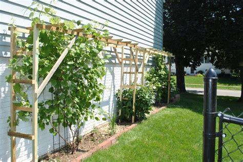 grape vine arbor designs grapevine trellis ideas google search cultivate your garden pinterest trellis ideas