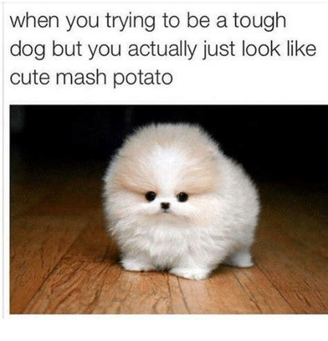 Mashed Potatoes Meme - 25 best memes about mash potatoes mash potatoes memes