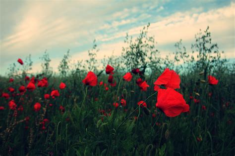 Free Images : nature sky sunset field meadow prairie