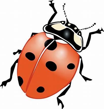 Ladybug Clip Svg Bug Lady Clipart Onlinelabels