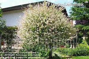 Laubbaum Mit Roten Blättern : gr bilder 301 fotos ~ Frokenaadalensverden.com Haus und Dekorationen