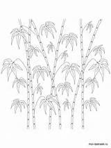 Bamboo Coloring Tree Ausmalbilder Bambus Malvorlagen Ausdrucken Kostenlos Zum Designlooter sketch template