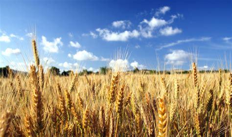 la lista completa dei cereali  le loro proprieta