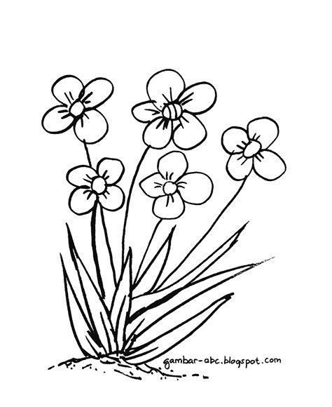 mewarnai bunga rumput