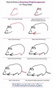 How To Draw An American Virginia Opossum