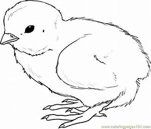 Baby Chicken Drawing At Getdrawingscom Free For