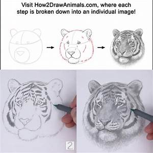 How To Draw A Tiger Portrait From How2drawanimals