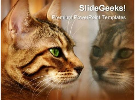 reflections animals powerpoint templates  powerpoint