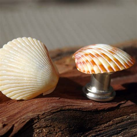 Real Seashell Cabinet Knobs by 17 Best Images About Shell Knobs On Drawer