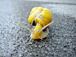Vitesse De Croisière : fonds d 39 cran animaux fonds d 39 cran escargots limaces ma vitesse de croisi re par reality04 ~ Medecine-chirurgie-esthetiques.com Avis de Voitures